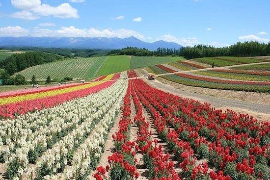 北海道の素晴らしいパノラマルート!富良野、美瑛、旭山動物園を見学しましょう!