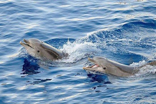 Tour des dauphins de Lovina, cascade...