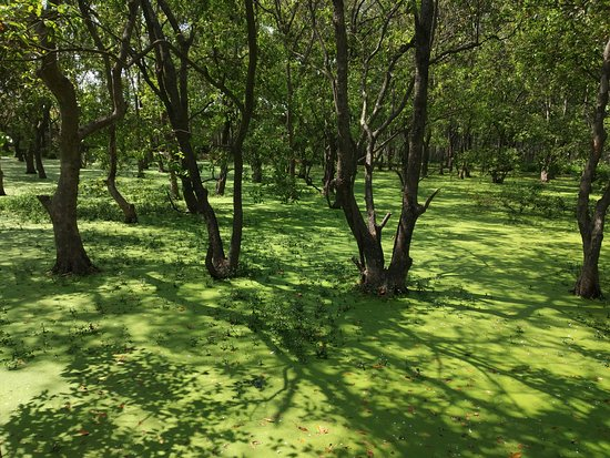 The swamp on one side of the walk in Shekha Jheel