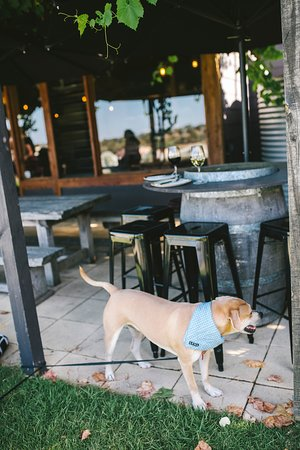 Dogs and wine go together so well.