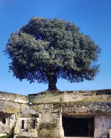 Le chêne qui domine l'entrée des carrières et explique le logo de la propriété.