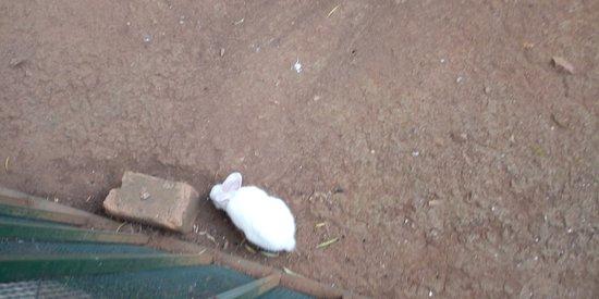 Banny rabbit