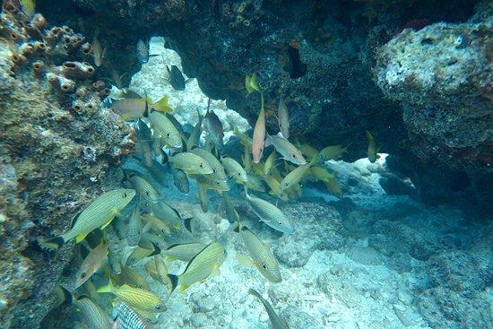 Key Largo diving