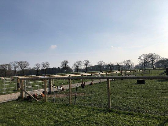 Attwell Farm Park