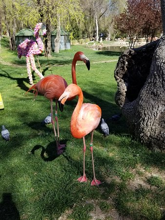 Zoo Aquarium de Madrid: The two friendly flamingos who loved the food available from the office at the entrance