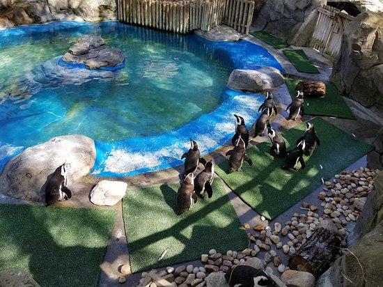 Zoo Aquarium de Madrid: The small penguin enclosure
