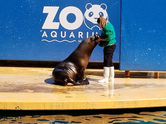 Zoo Aquarium de Madrid: The Sea Lion show which we caught the end of