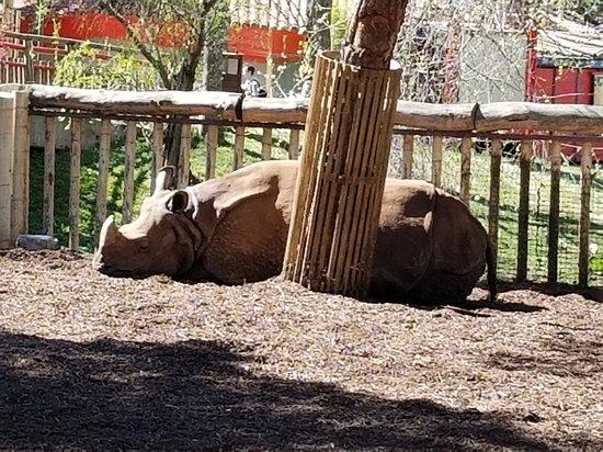 Zoo Aquarium de Madrid: A White Rhino