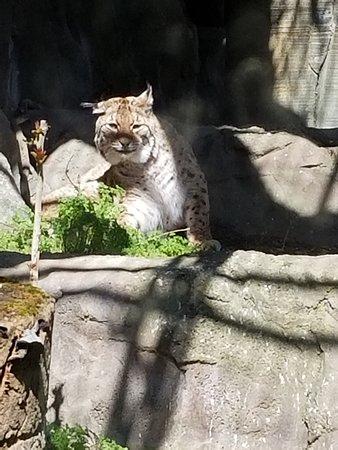 Zoo Aquarium de Madrid: A Lynx...I think