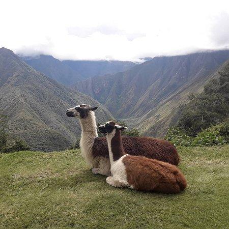 Wonderful experiences in the Andes! #Cusco #Peru #Machupicchu #Incas