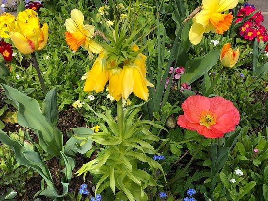Fleurs devant l'entrée du Parc de la Mairie de Roissy-en-France
