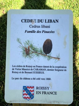 Panneau identifiant le cèdre du Liban au Parc du Cèdre