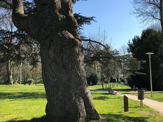 Tronc de l'arbre-roi du Parc du Cèdre