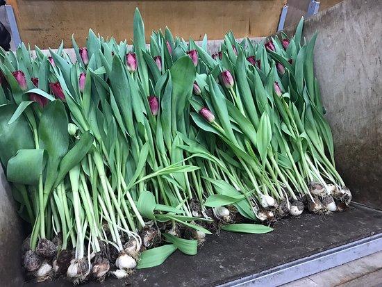 Kwekerij Siem Munster (Tulip Excursion)
