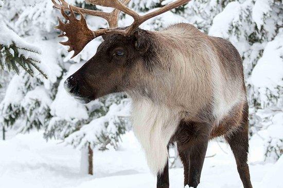 生态博物馆动物园:探索魁北克冬季的野生动物