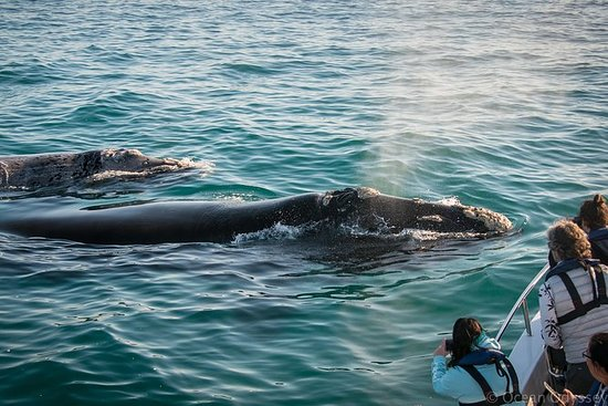 Toegestane nauwe ontmoeting Whale ...