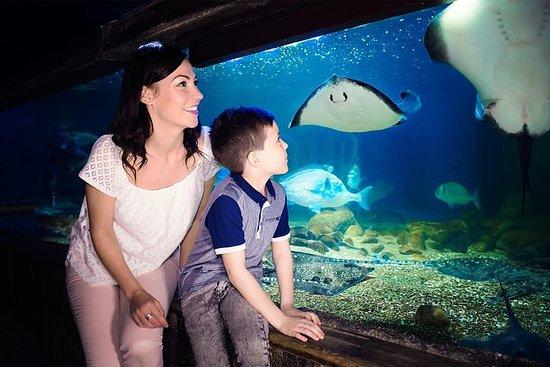 Billet d'entrée à l'aquarium SEA LIFE...