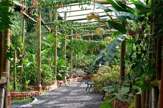 Mindo's Butterfly Garden Admission ...