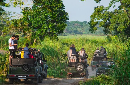 Kaziranga National Park, Indie: During Jeep Safari at Kaziranga. Call JungleFlit for authentic travel experiences in North East India.