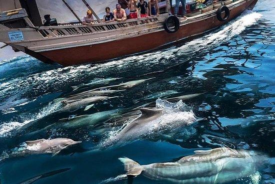 Observacion de Delfines y Snorkel