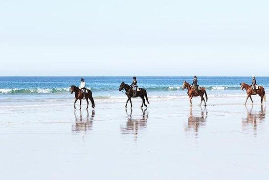 骑马,Beachrides,Strandritte,Hipica