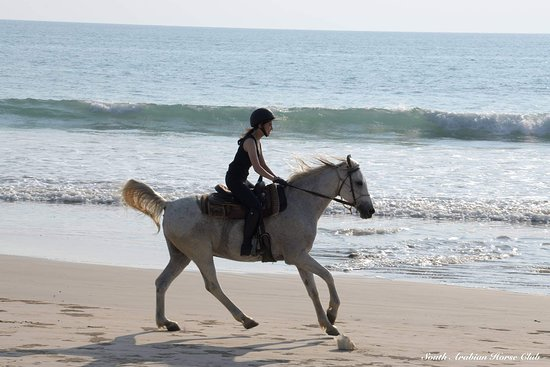 South Arabian Horse Club: A special weekend visit with riders from Bangkok