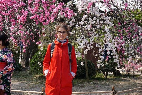 Shukkei-en Garden: В саду.