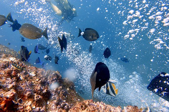 Unawatuna Diving Centre: Excellent visibility