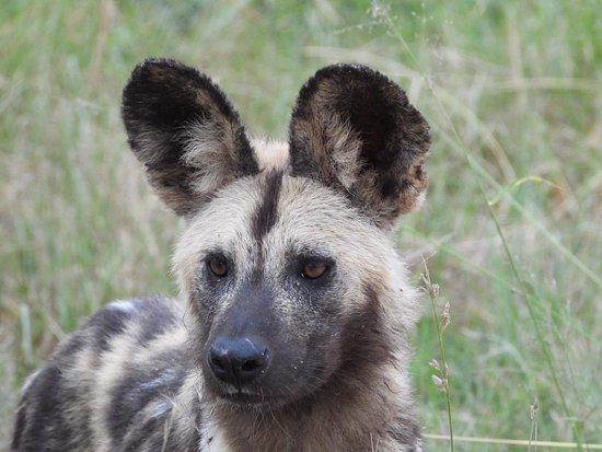 Valokuva: Safaria