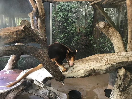 Zoo Miami: many great and unusual animals