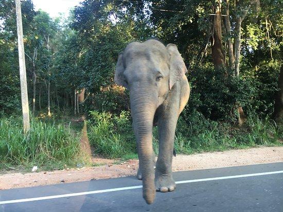 Jumbo veut traverser la route...