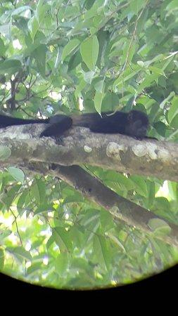 обезьяна (снимали через бинокль)