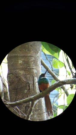 Птичка  (снимали через бинокль)