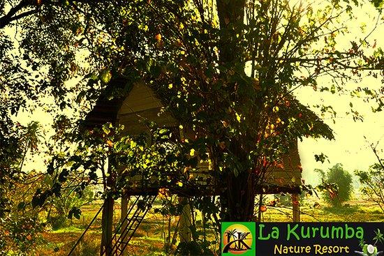 Kuliyapitiya, ศรีลังกา: Tree House