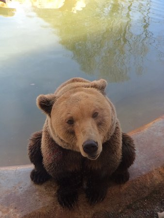 ours qui attend les pop corn