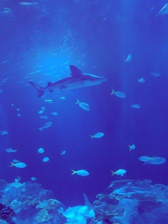 Sharks!!!
