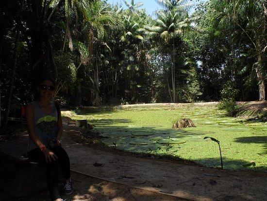 Museu da Amazonia (MUSA): Lago das vitórias régias