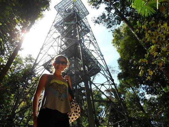 Museu da Amazonia (MUSA): A torre vista de baixo