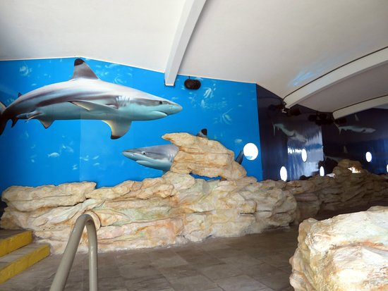 entering the underwater viewing area