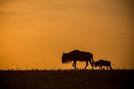 The Wildebeest Migration - Serengeti, Tanzania. On safari with Features Africa Journeys