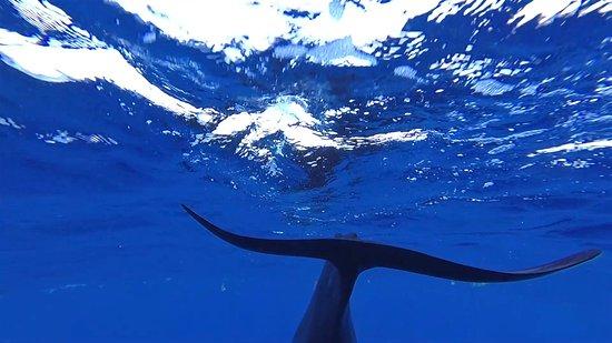 Roatan, Honduras: Pilot whales encounter near Roátan, Islas de la Bahia, Honduras. March 23, 2019.