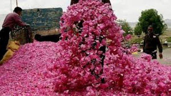 Qamsar roze water