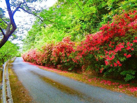 Daruma Forest Road