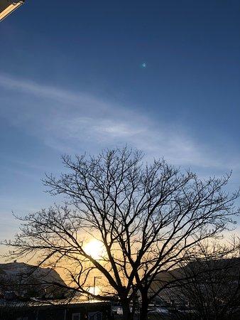 Tree rise