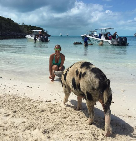 Pig Beach - Big Major Cay (Staniel Cay) - 2019 All You Need