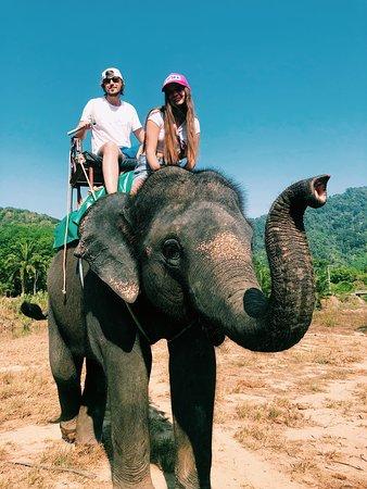 Phang Nga Elephant Park: отличный слон !)