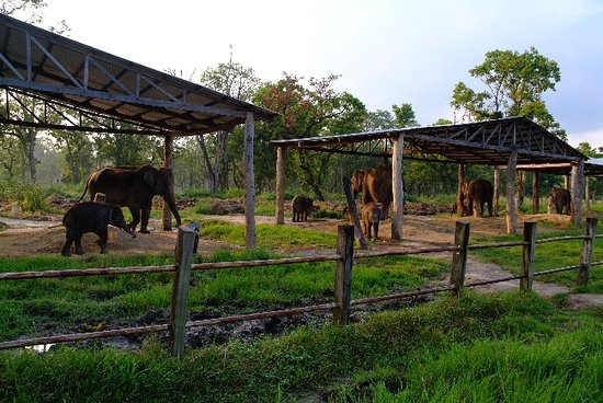 Elephant Briding Center at Chitwan National Park