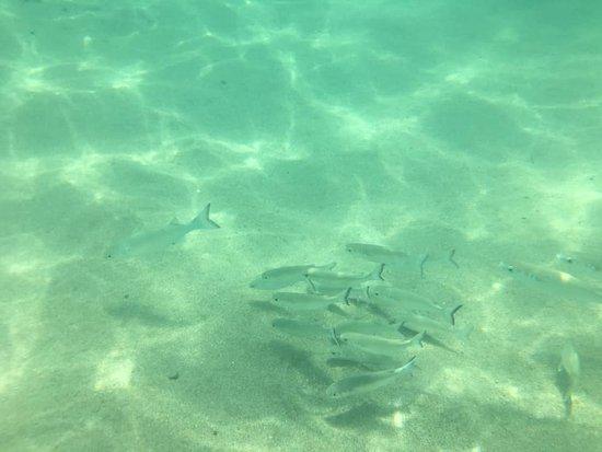 Carambola Beach Club: Leve seu equipamento de Snorkel!!!