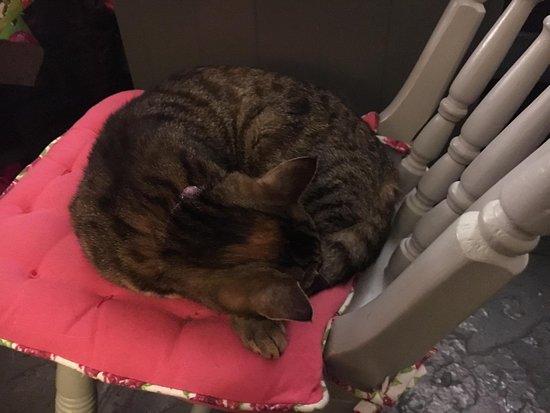 Shakespaw Cat Cafe: Tabby