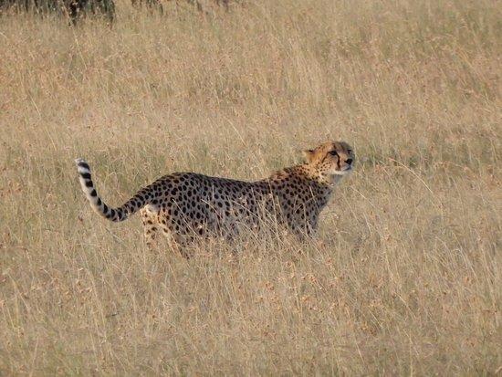 Kenya Expresso Tours And Safaris Nairobi 2019 All You